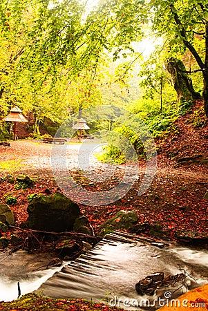 Fall camping with rain