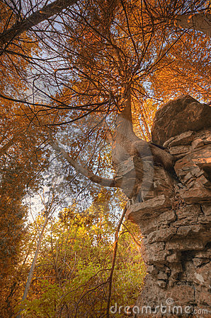 Fall Cliff