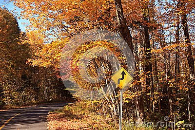 Fall color Road Drive