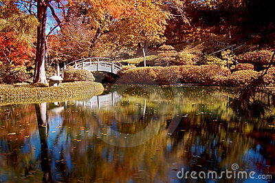 Fall Colored Foliage in a Japanese Garden