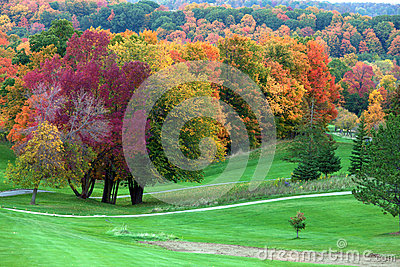 Fall colors in golf course