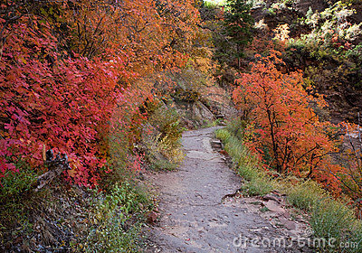 Fall Colors on Mountain Trail
