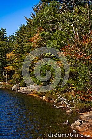 Lake shoreline in fall