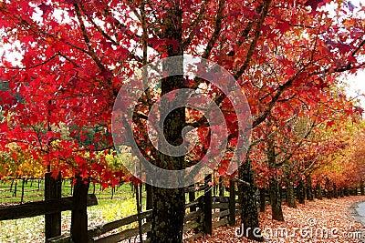 Fall Colors Sonoma Wine County