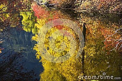 Fall Colors Wenatchee River Washington