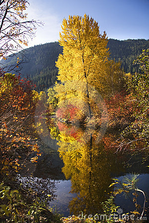 Fall Colors Wenatchee River Washington
