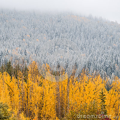 Fall colors, winter snow