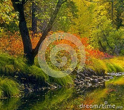 Free Fall Colors, Yosemite, California Stock Images - 15100864