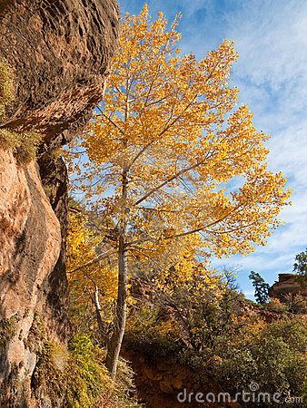 Fall Colors at Zion