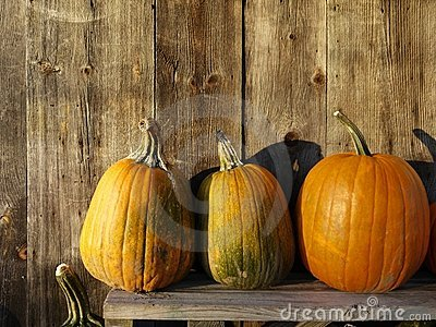 Fall: farm stand sunlit pumpkins