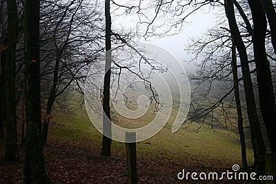 Fall Fog Forest