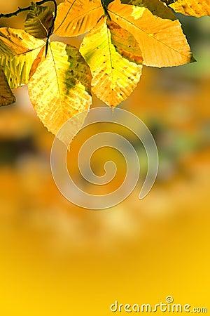 Free Fall Foliage Royalty Free Stock Photography - 25262787