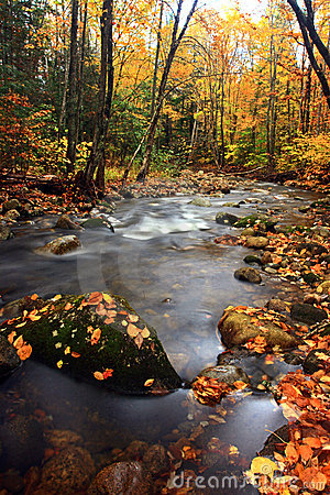 Fall foliage and clear stream