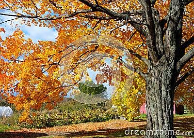 Fall Foliage on Vermont Farm
