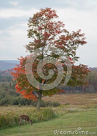 Fall Foliage West Virginia