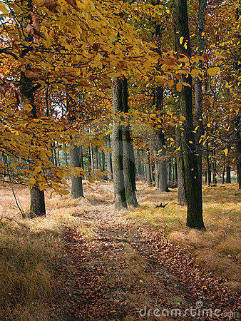 Fall forest #01