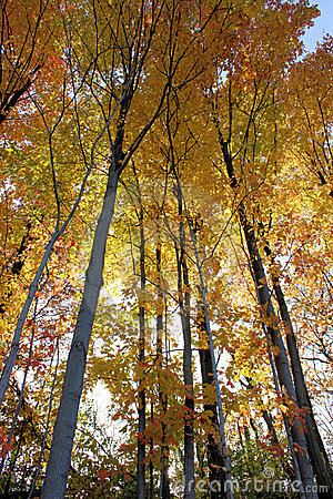Free Fall Forest Stock Images - 13617014