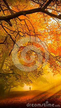 Free Fall Forest Cell Wallpaper Background Stock Image - 103598441