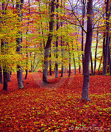 Free Fall Forest Colors Royalty Free Stock Image - 7107396