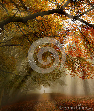 Fall forest path