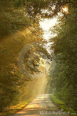 Free Fall Forest Road With Rays Of The Rising Sun Stock Photography - 10868392