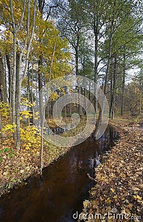 Fall gf leaves.