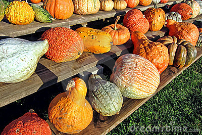Fall Harvest Decorative Vegetables on Farm Stand
