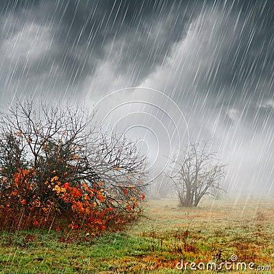 Fall landscape in rain and fog
