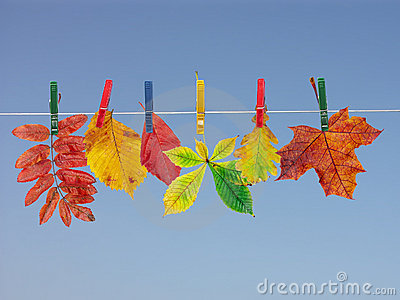 Fall leaf drying