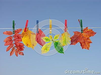 Fall leaf drying