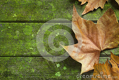 Autumn Fall Leaf Green Background
