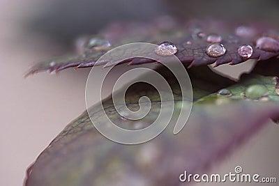 Fall leafs with rain drops