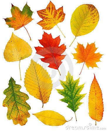 Free Fall Leaves Royalty Free Stock Image - 14061326