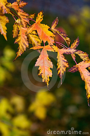 Free Fall Leaves Royalty Free Stock Photo - 2089735