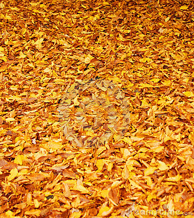 Free Fall Leaves Stock Photos - 3876543