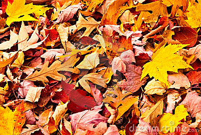 Fall Leaves/Background