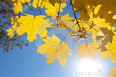 Fall Leaves with Blue Sky