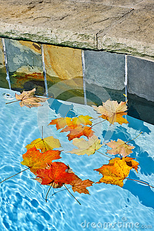 Fall leaves floating in pool
