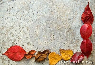 Fall leaves frame on grey