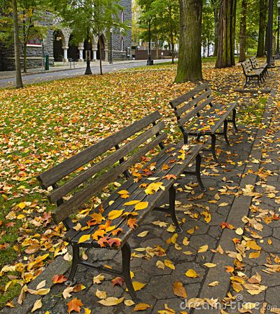 Free Fall Leaves On Benches Along Park 2 Royalty Free Stock Image - 16738466