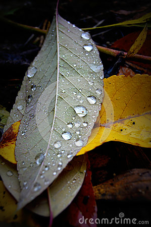 Fall Leaves Raindrops Stock Photo - Image: 45671713