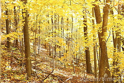 Fall leaves on the trees 1