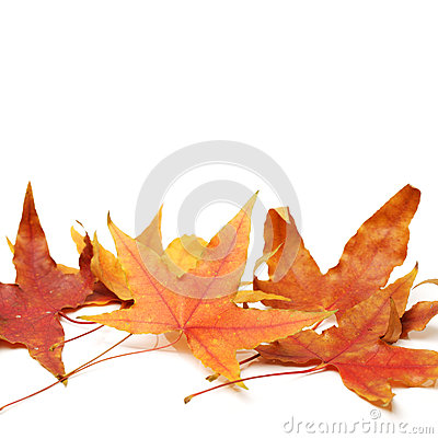 Free Fall Maple Leaves Stock Image - 34901801