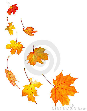 Free Fall Maple Leaves Background Stock Image - 6669401