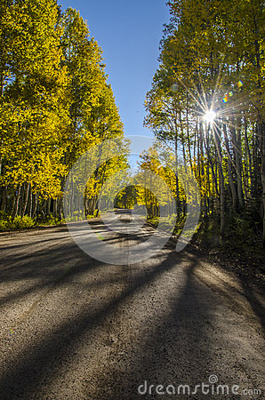 Fall Morning Drive in the Aspens