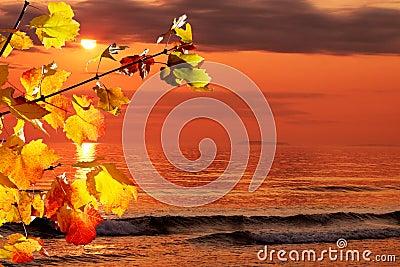 Fall morning at the ocean
