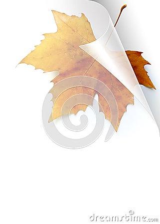 Fall Page