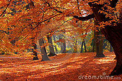 Fall In A Park Stock Images - Image: 4534014