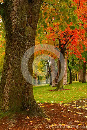 Fall Park Perspective Royalty Free Stock Image - Image: 16765076