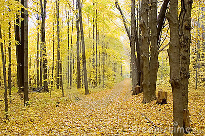 Fall Path, Horizontal